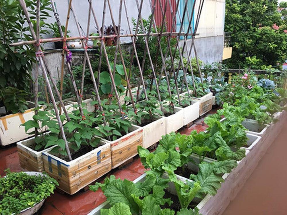 cách trồng nho bằng cành