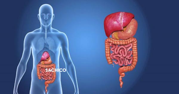 Hệ tiêu hóa đường ruột