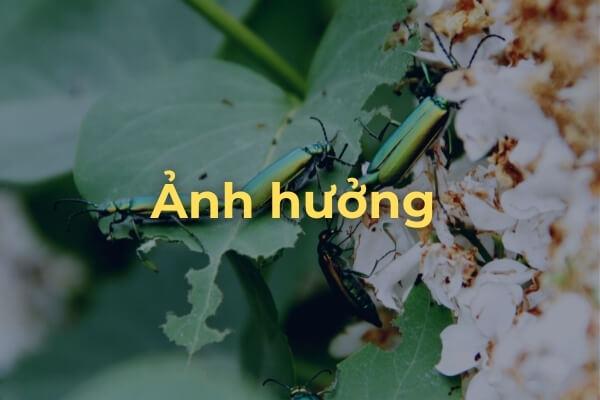 ảnh hưởng của bọ cánh cứng tới khu vườn