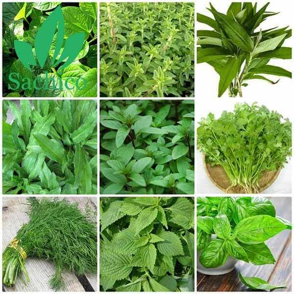 Hình ảnh các loại cây rau thơm