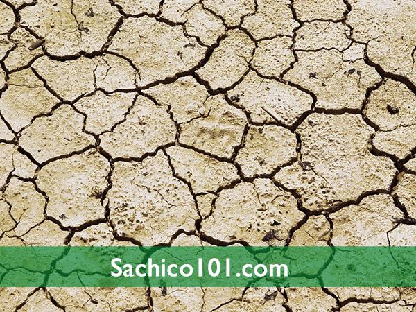 cách làm tơi xốp đất