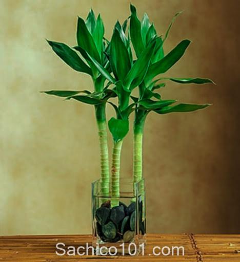 cách trồng cây trong nước