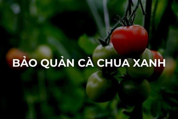 Cách bảo quản cà chua xanh