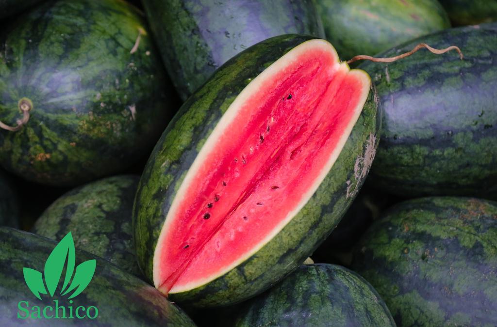 Kỹ thuật trồng dưa hấu ở miền bắc