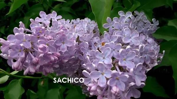 những loài hoa thơm nhất Việt Nam