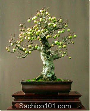 nhung-mau-bonsai-mini-dep-6