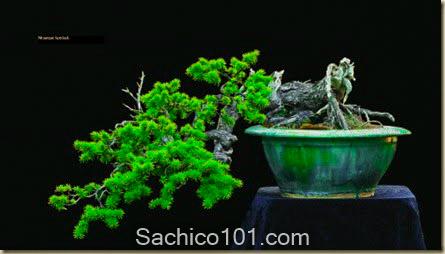 nhung-mau-bonsai-mini-dep-7
