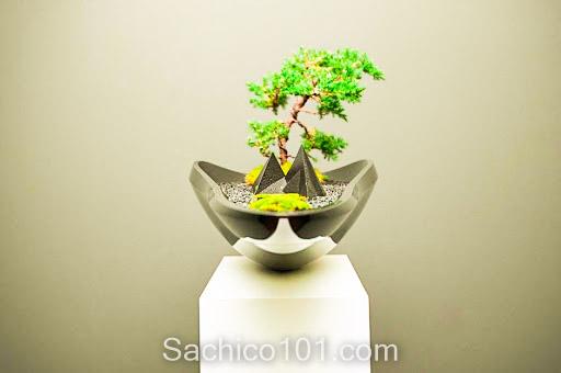 Những mẫu bonsai mini đẹp
