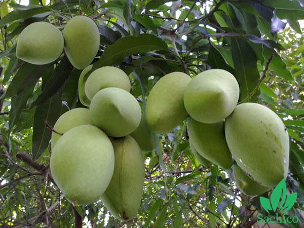 các loại cây ăn trái dễ trồng