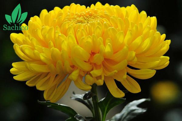 tên các loại hoa màu vàng