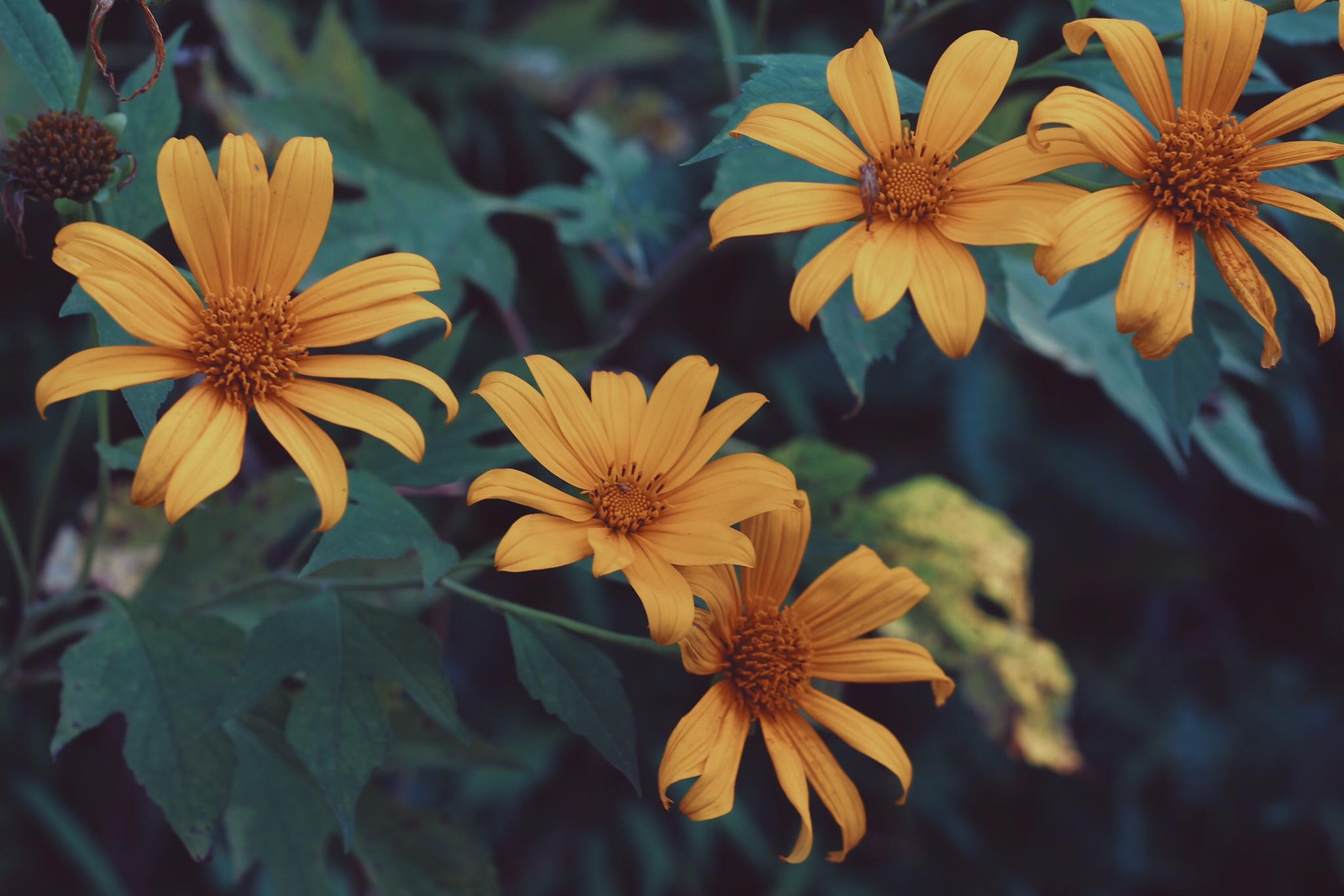 tên các loài hoa dại