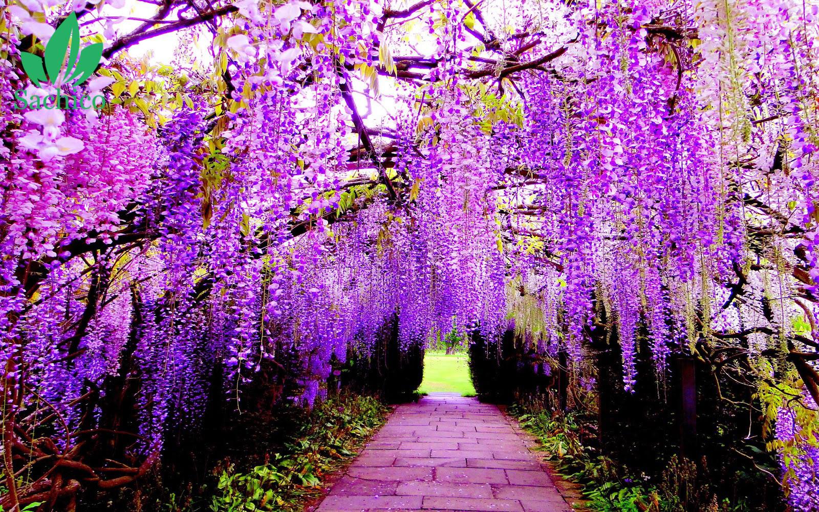 tên các loài hoa màu tím