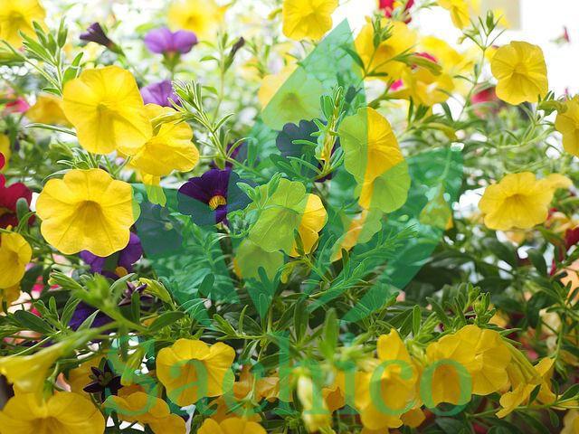 tên các loài hoa nở quanh năm
