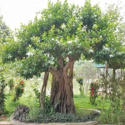 Các loại cây giâm cành phổ biến nhất năm 2021