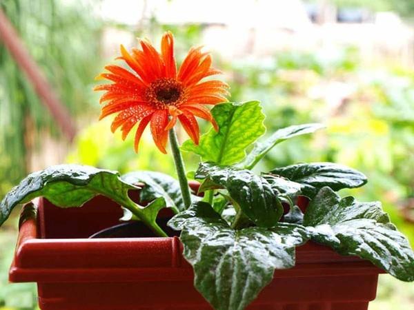 Các loại hoa dễ trồng trong chậu nhỏ
