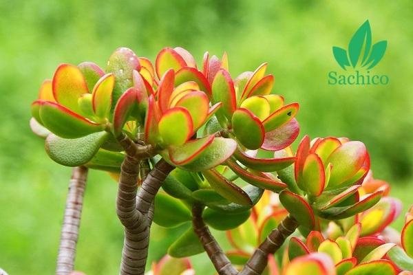 Những loài hoa không cần ánh nắng mặt trời đẹp nhất