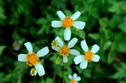 Tên Các Loài Hoa Dại đẹp và Ý Nghĩa nhất