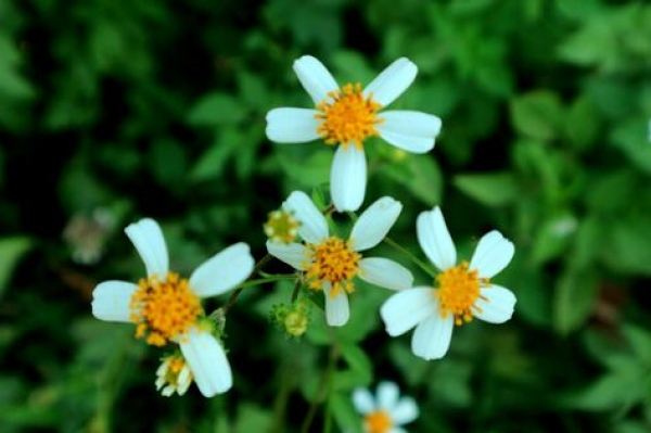 Tổng hợp danh sách tên các loài hoa dại đẹp nhất ở Việt Nam