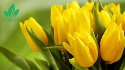 Tổng hợp tên các loại hoa màu vàng ở Việt Nam có thể bạn chưa biết.