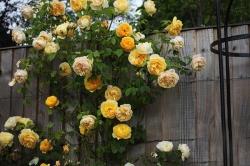 Khám phá Tên Các Loài Hoa Nở Quanh Năm cực đẹp