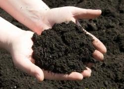Tỷ lệ trộn đất trồng cây chuẩn và phù hợp với Môi Trường