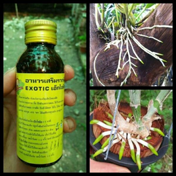 Các Loại thuốc kích thích ra rễ cây tốt nhất bạn nên biết