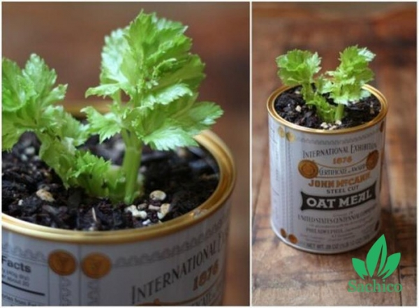 Bật mí 10 loại cây trồng 1 lần mà có thể ăn mãi mãi không hết