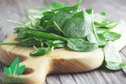 Ăn rau mồng Tơi có tác dụng gì cho việc chăm sóc da?