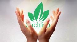 Giới thiệu tổng quan về công ty hạt giống,cây giống Sachico