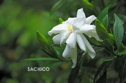 [KHẢO SÁT] Những loài hoa thơm nhất Việt Nam và Thế Giới