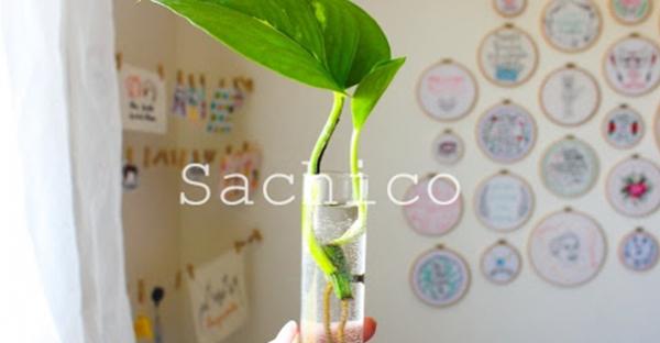 Hướng dẫn Cách trồng Trầu bà trong nước hiệu quả