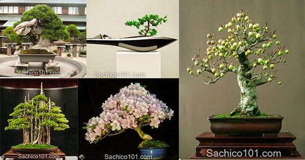 Những mẫu bonsai mini đẹp nhất thế giới