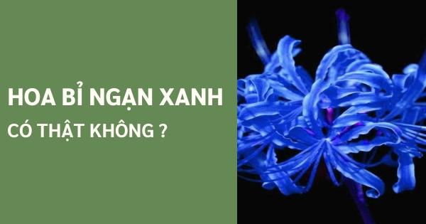 Hoa Bỉ Ngạn Xanh có thật không? Nguồn gốc hoa Bỉ Ngạn xanh
