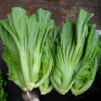 Hạt giống rau cải bẹ