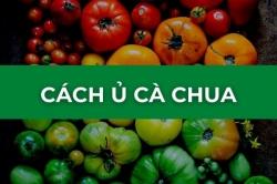 Hướng dẫn cách ủ cà chua chín nhanh không hóa chất