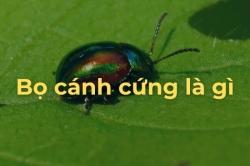 Làm thế nào để loại bỏ Bọ cánh cứng ăn Lá cây