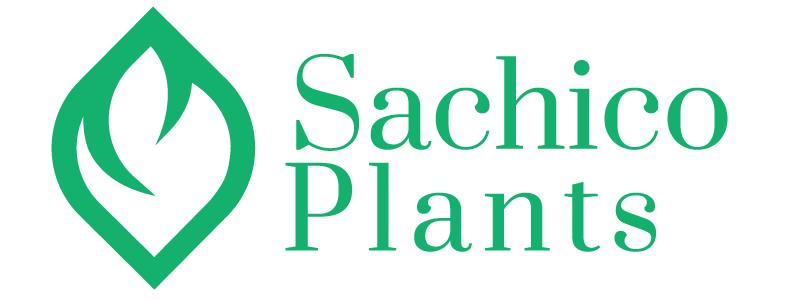 Sachico | Mua Cây, Hạt giống Online